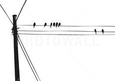 Blackbird - Wall Mural & Photo Wallpaper - Photowall