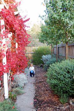 Garden inspiration using Australian native plants