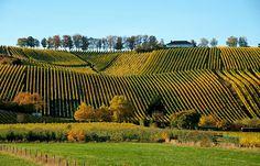 Hab jetzt Lust auf Weiswein.  ...  Gut, dass welcher kalt liegt. Auch aus Luxembourg. :-)