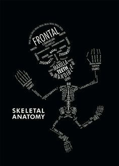 SKELETAL ANATOMY by Amy Kwan An informational poster displaying the hierarchy and organizational relationships with typography. In this case, type serves as both image and information on the skeletal anatomy.makes me think of xray school Med Student, Anatomy Art, Human Anatomy, Information Poster, Medical Assistant, Medical Billing, Med School, High School, Anatomy And Physiology