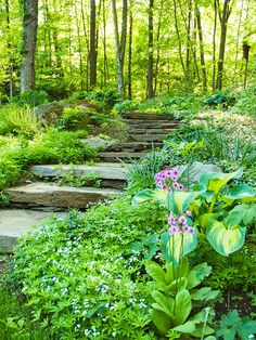 Sweet woodruff (Galium odoratum) spills over the edges of stairs in this shade garden - The sloped border includes ferns, hostas, Japanese primroses, and moss-covered rocks