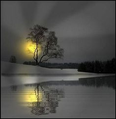 black and white photography with color splash nature Beautiful World, Beautiful Places, Beautiful Pictures, White Photography, Nature Photography, Color Photography, Yellow Moon, Gray Yellow, Belle Photo