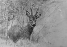 Antler bearer – hunting painter Thomas Bold – About Hobby Sports Hog Hunting, Hunting Art, Hunting Cabin, Hirsch Tattoo, Hunting Pictures, Wildlife Art, Antlers, Animal Drawings, Moose Art