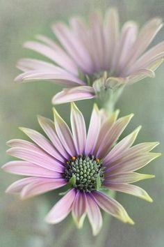 Breathtaking Beautiful Flower Photos