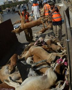 Hunted, Piled in The Road and Then Dumped in a Rubbish Pile! Put A Stop To Stray Dog Culling In Pakistan!   PetitionHub.org