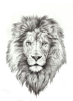 Best Lion Tattoo Collection - best tattoo - best tattoo for women - be Lion Head Tattoos, Mens Lion Tattoo, Leo Tattoos, Animal Tattoos, Body Art Tattoos, Tattos, Lion Tattoo Design, Tattoo Designs, Tattoo Ideas