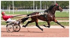 Four Strong Winds - son of Andover Hall on prominke.;  Standardbred