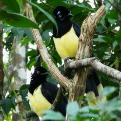 #bird in argentina