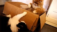 Do you fight about it? Try to make them see eye-to-eye? | The Search For Love, As Told By Cats In Boxes