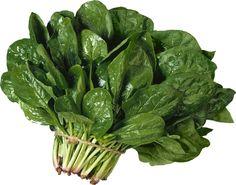 """Сияющие глаза - шпинат (витаминная таблетка, все микроэл-ты и вит.), в нем содержится лютеин, хорош для профилактики глазных заболеваний. Шпинат также способен снимать усталость и возвращать белкам их природный белый цвет. В день достаточно употреблять 1-2 стакана листьев свежего шпината или 3 раза в неделю до 100 гр (70-80гр) -> лютеин, благодаря которому белкам глаз возвращается их природный белый цвет.   >Шпинат – """"метла"""" для кишечника Шпинат – суперпопулярное растение в мире и среди…"""