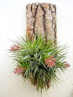 Houseplants That Filter the Air We Breathe Wall Mounted Tillandsia Geminiflora Ikebana, Air Plant Display, Plant Decor, Air Plants, Indoor Plants, Garden Art, Garden Plants, Perennial Flowering Plants, Plant Crafts