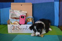 Kiba y su primera cajita PetSecret