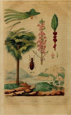 4 - Dictionnaire pittoresque d'histoire naturelle et des phénomènes de la nature / - Biodiversity Heritage Library