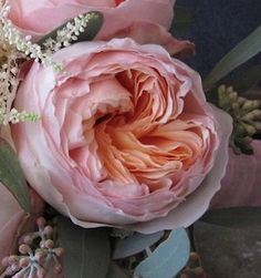 Peachy pink juliet garden roses: all year Is this available in shades of purple? Pink Garden, Love Garden, Garden Roses, Garden Art, Garden Design, Juliet Garden Rose, Beautiful Gardens, Beautiful Flowers, Simply Beautiful