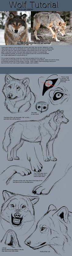 Wolf Tutorial by TheMysticWolf.deviantart.com on @DeviantArt