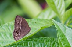 Butterfly on green leaves -