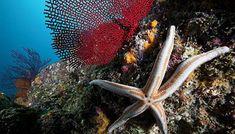 Ecosistemas de México - Arrecifes
