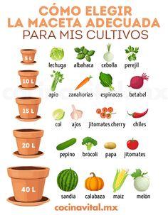 Eco Garden, Garden Deco, Home Vegetable Garden, Fruit Garden, Succulents Garden, Garden Plants, Planting Flowers, Organic Gardening, Gardening Tips