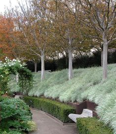 carex: Tulbaghia violacea 'Silver Lace' (Variegated Society Garlic) under Crape Myrtles in the fall. Landscape design by Robert Irwin. Photo by Jane Auerbacher. remash: landscapehorticulture: in the central garden ~ nowhereonearth Garden Landscape Design, Landscape Architecture, Fall Landscape, Landscape Designs, Landscaping A Slope, Landscaping Ideas, Sloped Garden, Ornamental Grasses, Walled Garden