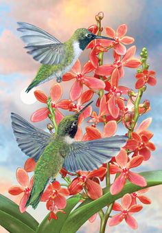 Black Chinned Hummingbirds With Orchids by Rosiland Solomon