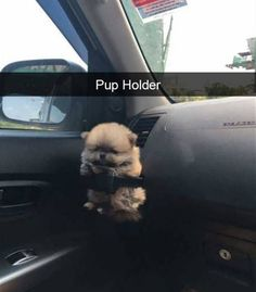 Have A Look Into The Hilarious Real Lives Of Animals Via Snapchat (29 Pics).