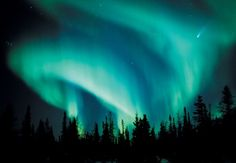 Northern Lights in the Canadian Arctic, amazing! This is also a great link to an Eco Travel site. Aurora Borealis, Moon Shadow, Weather Seasons, See The Northern Lights, Arctic Animals, Nature Paintings, Out Of This World, The Wiz, Optical Illusions