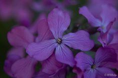 Nieuwerkerken #bloem #bloemen #flower #flowers #wandelen #genieten #photooftheday #genietenvankleinedingen #belgium #belgië  #canon #canonphotography #canonphoto #nieuwerkerken #canonbelgium #be_at_design