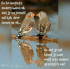 Afrikaanse Quotes, Goeie More, Angel Prayers, Morning Blessings, Biblical Inspiration, Good Morning Greetings, Christen, Inspirational Thoughts, Christmas Wishes