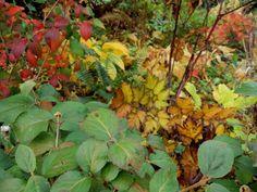 Autumn in garden