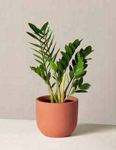 Tall Plants, Hanging Plants, Live Plants, Sea Plants, Hanging Baskets, Cactus Plants, House Plants Decor, Plant Decor, Begonia