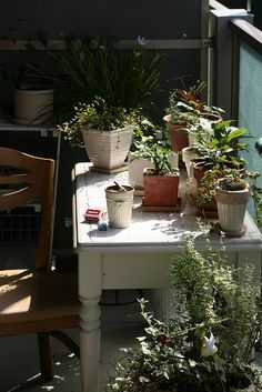 looking like my potting shed