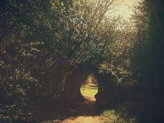 Enchanted woodland walk