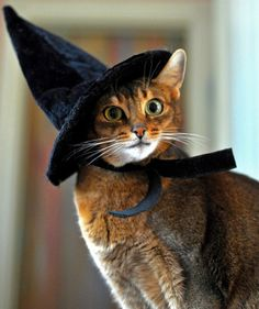 """A witch who is bored might do ANYTHING."" --Terry Pratchett"