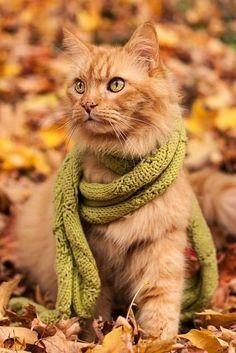 an autumn puddy cat