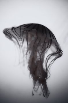 Jelly by Andrew Vox Photography in Photography . Black . Nero . Noire . Movement .