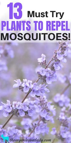 13 Must Try Plants To Repel Mosquitoes! Natural Mosquito Repellent, Plants for Mosquitoes, Gardening Tips, Herbs In The Garden, Growing Ornamental Plants Source by organicgoatlady.