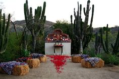 hmmm. seriously considering this. ceremony venue at Flora Farms, san Jose del cabo