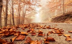 Nature Macro Background Wallpaper by James Allen on FL | Nature HDQ | 1.33 MB