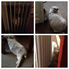 Bunny cozies up next to the radiator - January 10, 2015