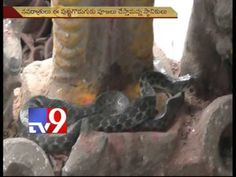 Snake slithers out of pit, rests near Ganesh idol's feet
