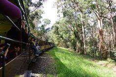 墨爾本❤️蒸汽小火車