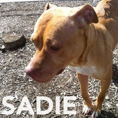 Sadie has such a happy tail it's getting bruised in her kennel. Could you give her a forever home? Meet her at 184 Verona St, Rochester
