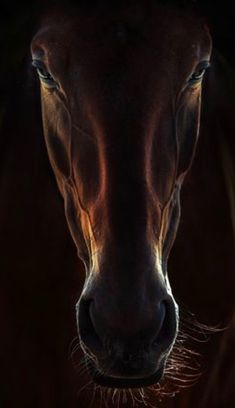 ✥✰✥ PORTRAIT OF A HORSE ✥✰✥ 💛💛❧ Source by toni_ledat dog dog memes dog videos videos wallpaper dog memes dog quotes dogs dogs pictures dogs videos puppies puppy video Most Beautiful Animals, Beautiful Horses, Beautiful Creatures, Horse Photos, Horse Pictures, Animal Pictures, Horse Love, Horse Girl, Animals And Pets