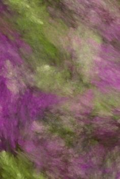 A compilation of colourful photos that are of interest to me. I hope you enjoy them also. Plum Purple, Shades Of Purple, Green And Purple, Olive Green, Violet Aesthetic, Green Grapes, Creative Colour, Green Copper, Colour Board