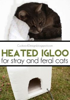 Cat Care DIY heated igloo for stray and feral cats - How to make a heated igloo for cats - - DIY heated igloo for feral and stray cats Stray Cats, Cats And Kittens, Feral Cat Shelter, Feral Cat House, Cat Shelters For Winter, Kitty House, House Ideas, Outdoor Cats, Outdoor Cat Shelter Diy
