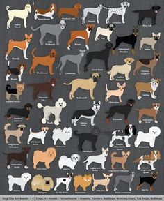 Dog Clip Art Bundle, 42 breeds, 50 digital dog images. Save $8 when you purchase the bundle - toy dogs, hound dogs, terriers, bulldogs and working dogs. Buy 2 Get 1 Free. #dogbreeds #clipartbundle #petlovers #doglovers #dogs #graphicdesign #dogclipart #dogillustration #dogs #clipartbundle #pets