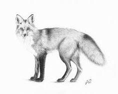 fox drawing - Google zoeken