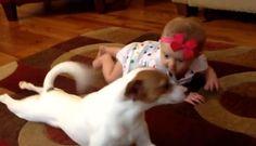 cite dog