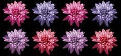 25 Flower Photography Tutorials To Help You Perfect Your Floral Photography #LallaGatta via @LallaGatta