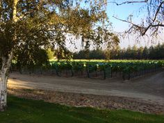 Shoestring Vineyard Property view